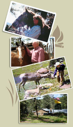Los Pinos Guest Ranch Activities